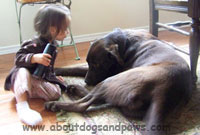 Black lab mix playing with little girl